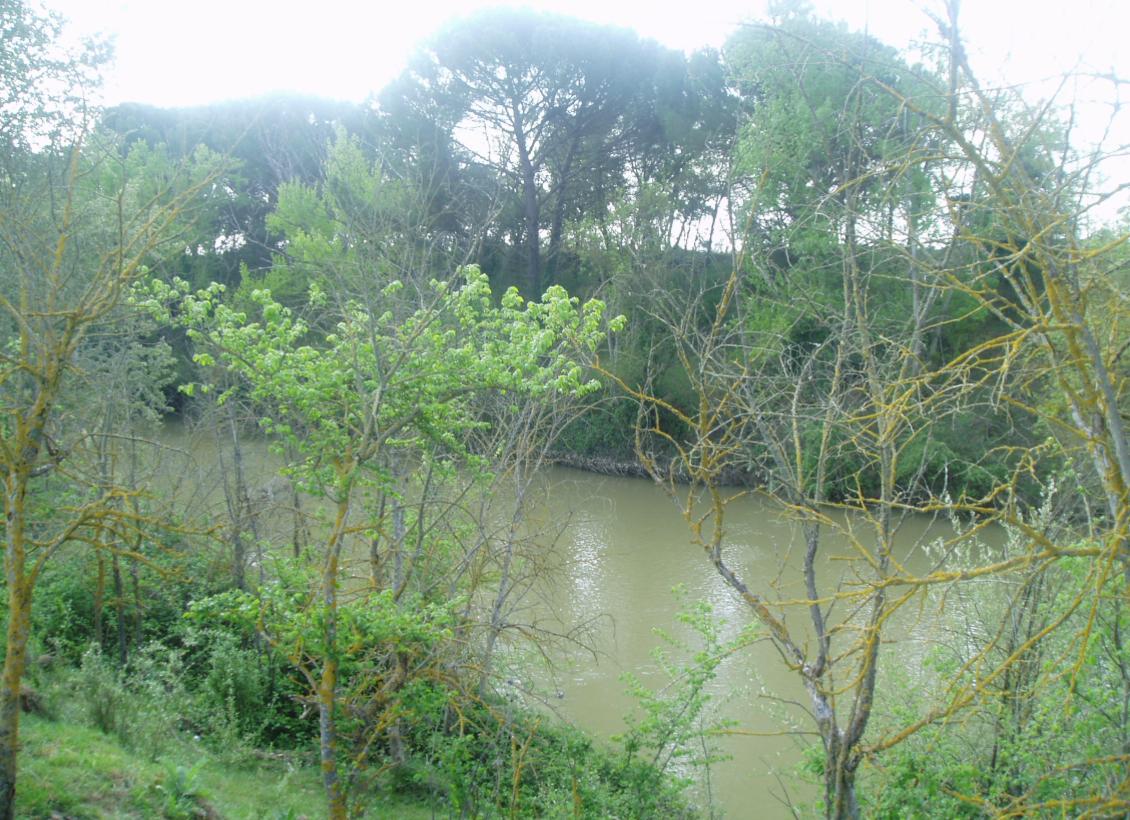 Río Duero a su paso por el término de La Cistérniga